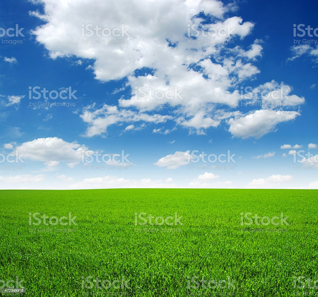 White clouds against blue sky over rich green grass field stock photo
