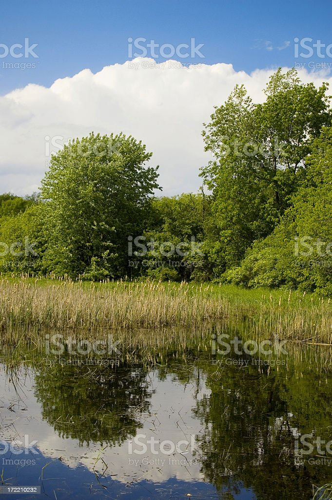White Clouds and Trees Mirrored in Pond royalty-free stock photo