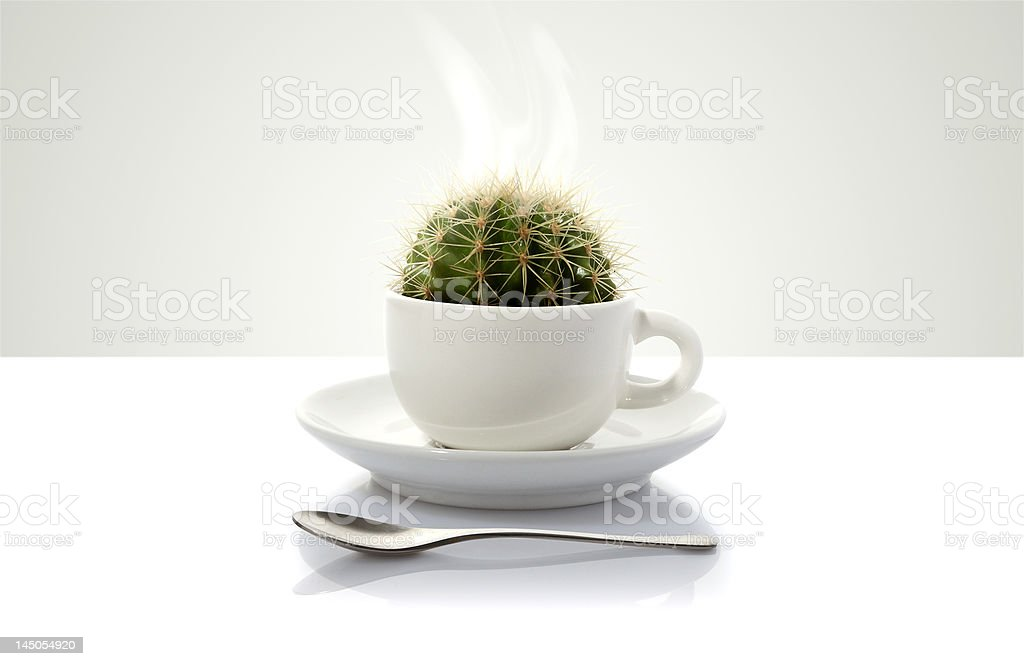 White coffee cup with cactus royalty-free stock photo