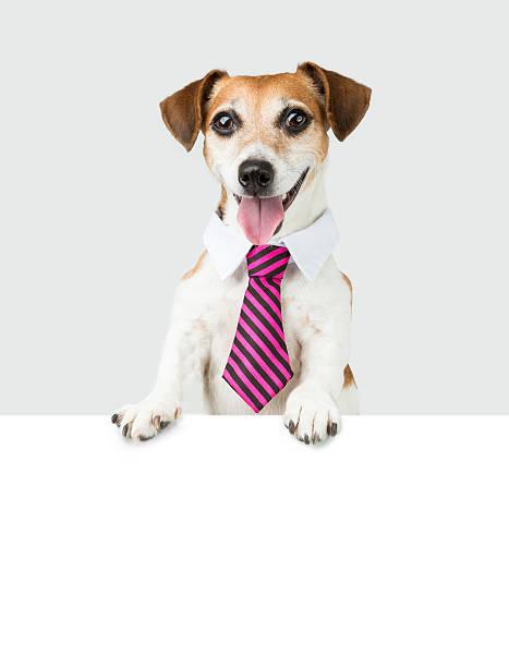 bürojob hund - coole liebessprüche stock-fotos und bilder