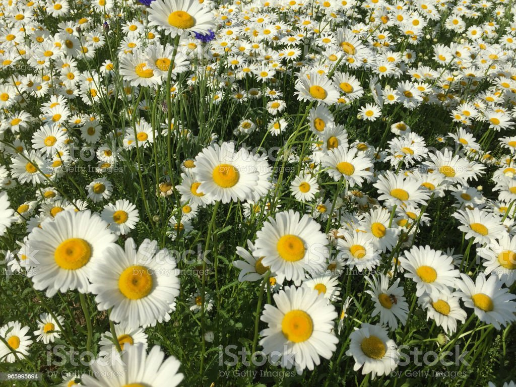 white color flower - Royalty-free Backgrounds Stock Photo
