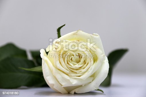 867916232 istock photo White color of rose and green leaf on the white floor. 974018180