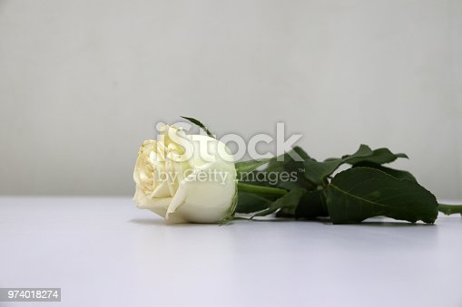 867916232 istock photo White color of rose and green leaf on the white floor. 974018274
