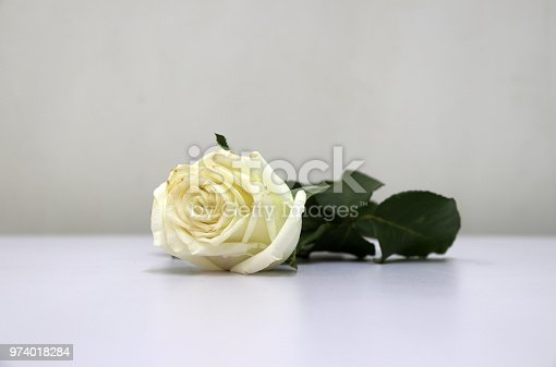 867916232 istock photo White color of rose and green leaf on the white floor. 974018284