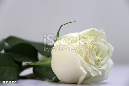 867916232 istock photo White color of rose and green leaf on the white floor. 974018350