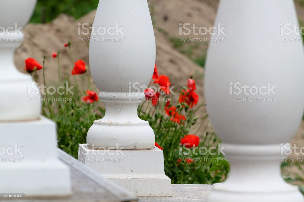 White columns and red poppies stock photo