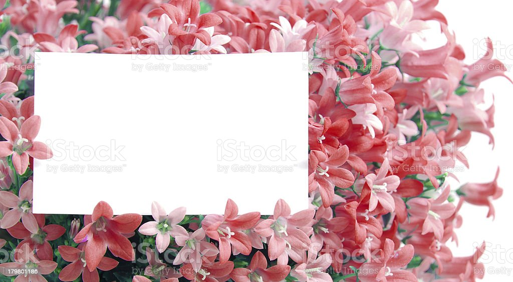 white copyspace in red flowers royalty-free stock photo