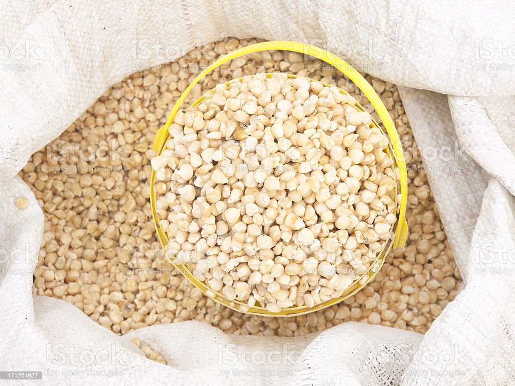White corn stock photo