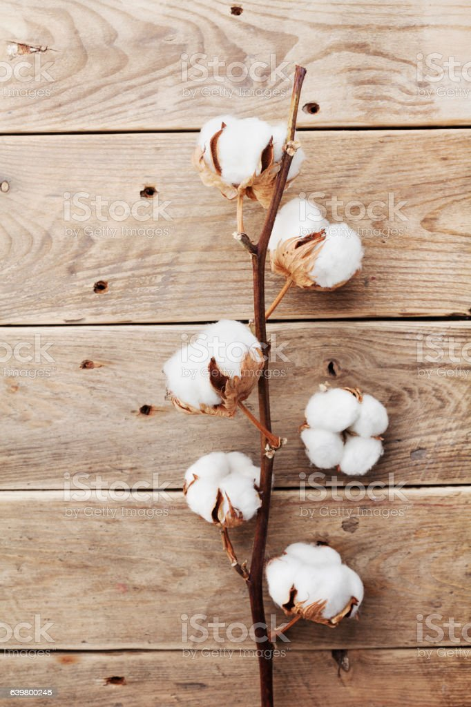 White cotton flowers on rustic table. Flat lay. Vintage style. stock photo