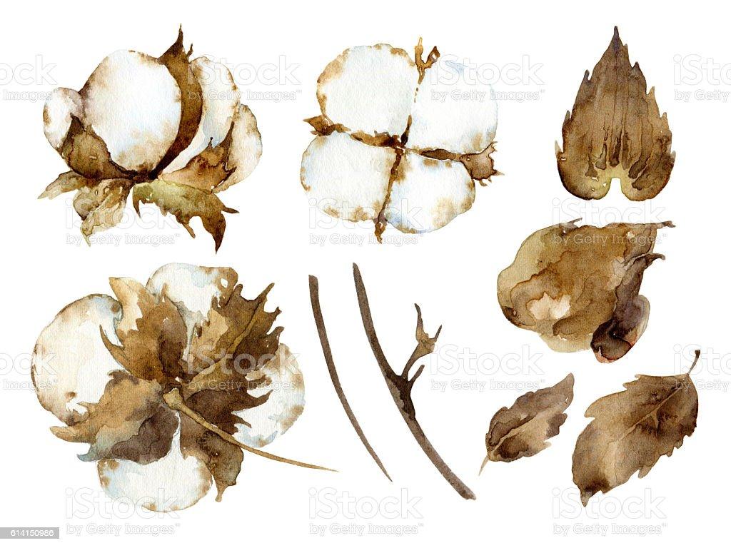 White cotton flowers stock photo