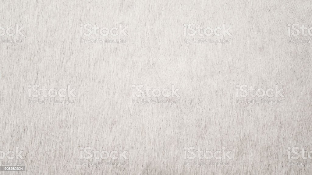 White Cowhide stock photo