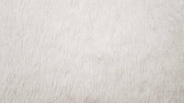 White Cowhide White Cowhide for background or texture, white fur animal hair stock pictures, royalty-free photos & images