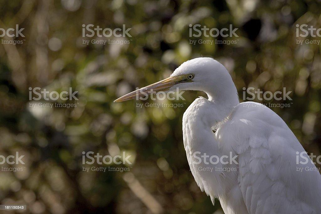 White Crane stock photo