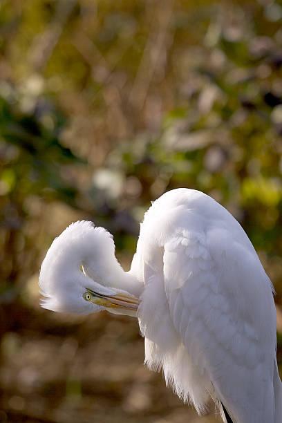Weißer Kran – Foto