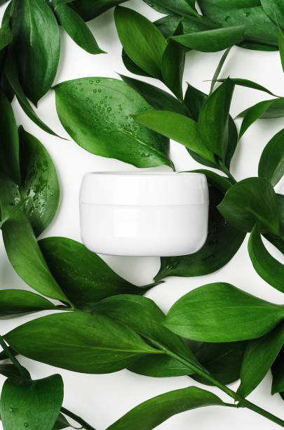 White cream in open jar top view with decorative green foliage. Organic cosmetics skincare product with natural ingredients on white background with plant twigs. Eco-friendly beauty industry concept stock photo