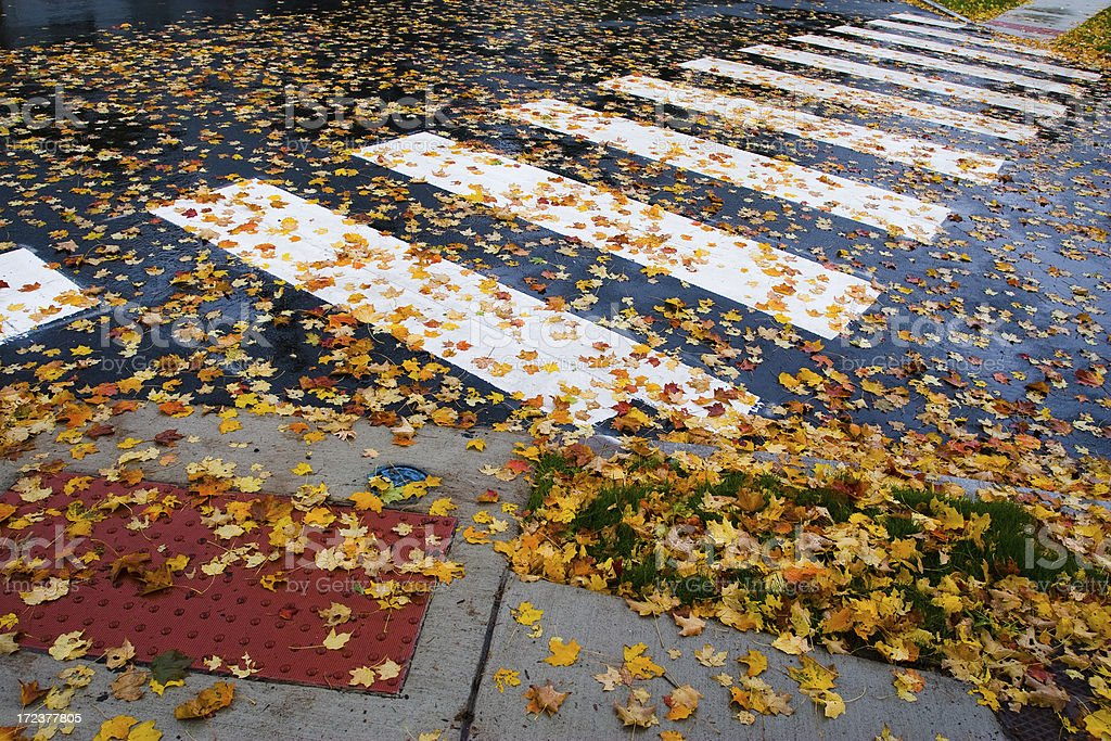 White crosswalk and Fall leaves on wet street royalty-free stock photo