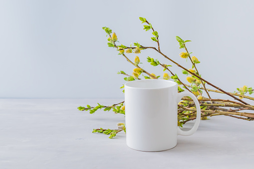 White cup mockup with a willow branch on a gray background