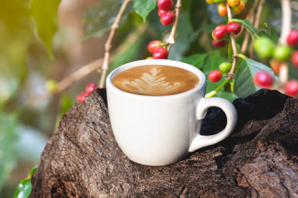 white cup of coffee or tea on wooden plate over blurred plantation of coffee tree with sun lighting. stock photo