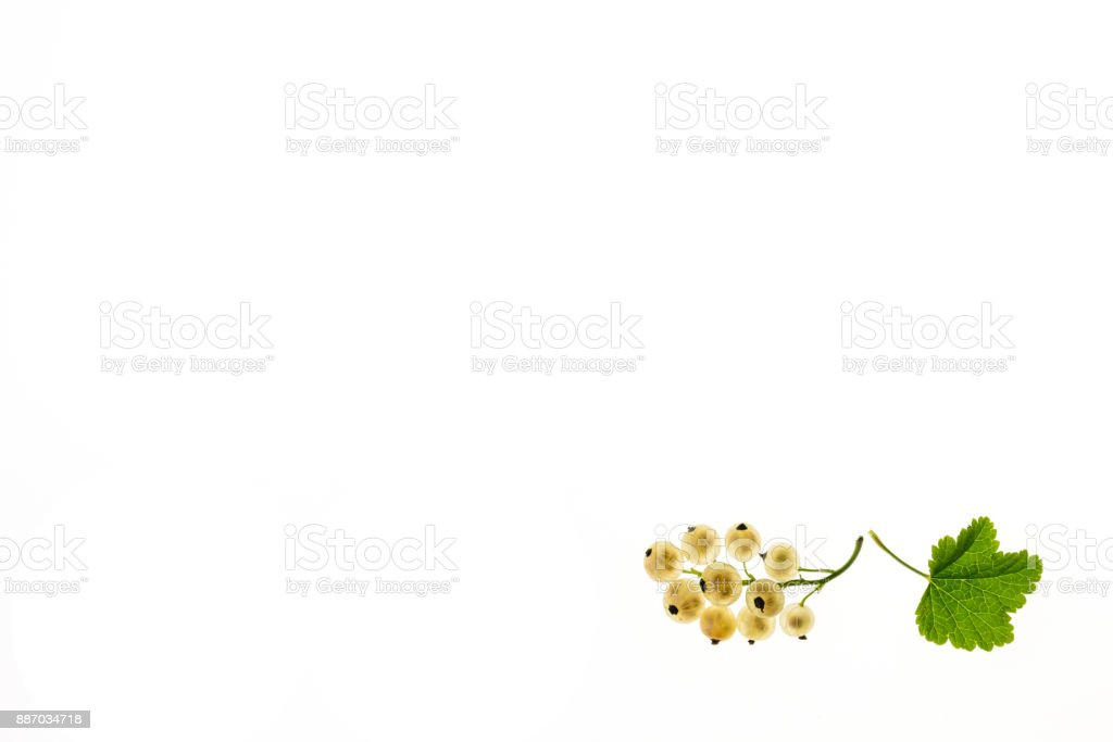 white currant berries with leaf on white background with copy space stock photo