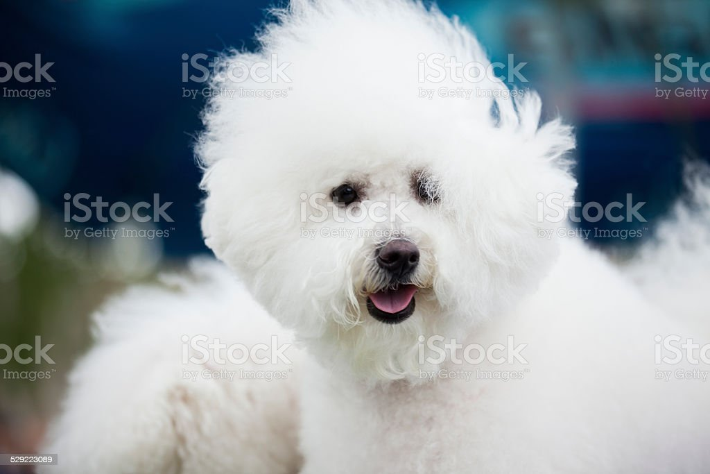 white cute  dog stock photo