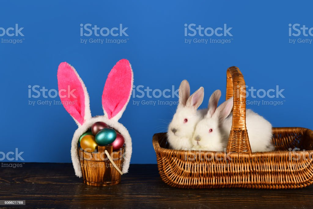 White Cute Rabbits In The Basket Cute Bunny Rabbits With Funny