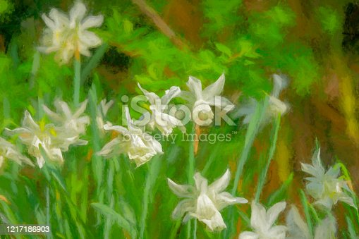 Selective focus of white daffodils on a bright spring day. Heavily post processed to create a dreamy painterly effect.