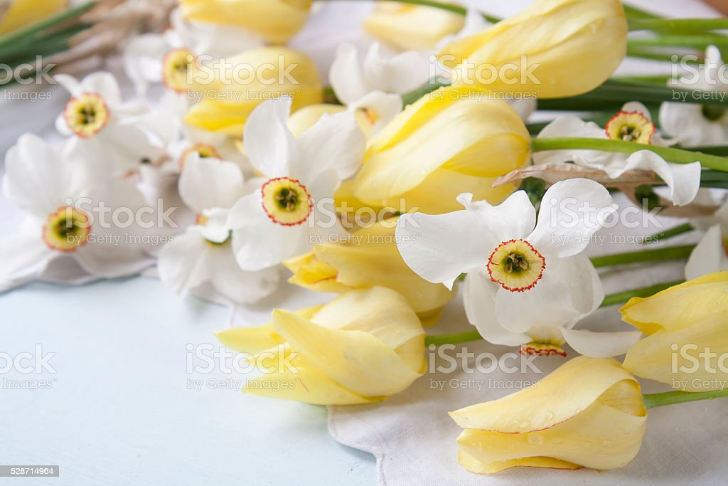 White daffodils narcissus and yellow tulips royalty-free stock photo