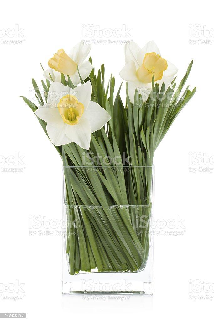 White daffodils royalty-free stock photo