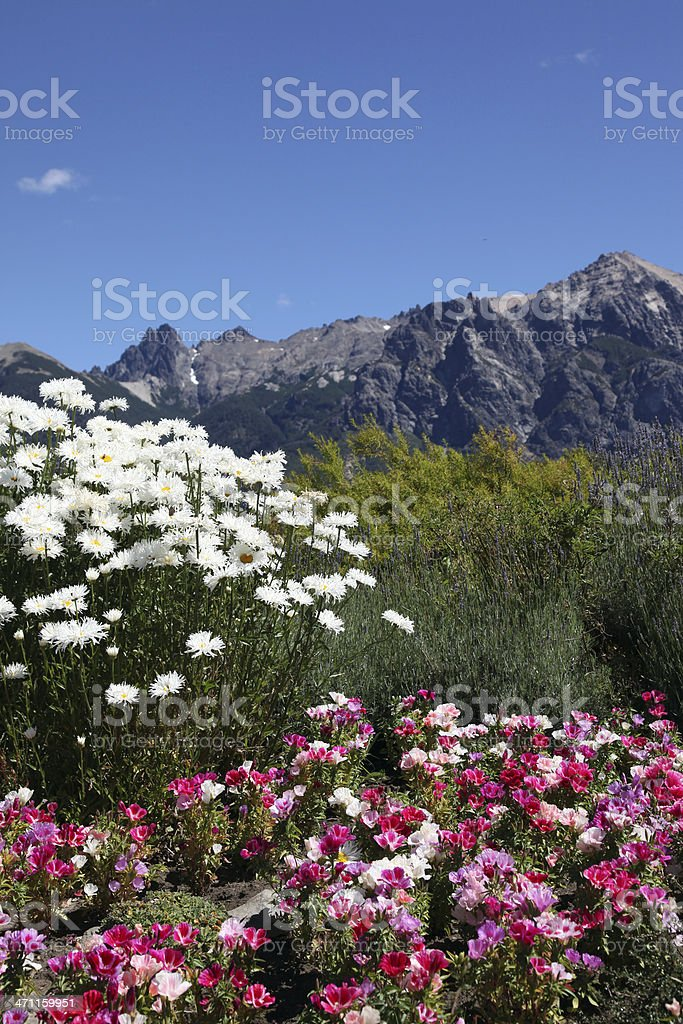 White Daisies and Pink Flowers and Mountain Landscape Background royalty-free stock photo