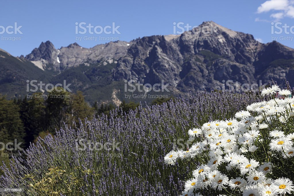 White Daisies Flowers and Mountain Landscape Background royalty-free stock photo