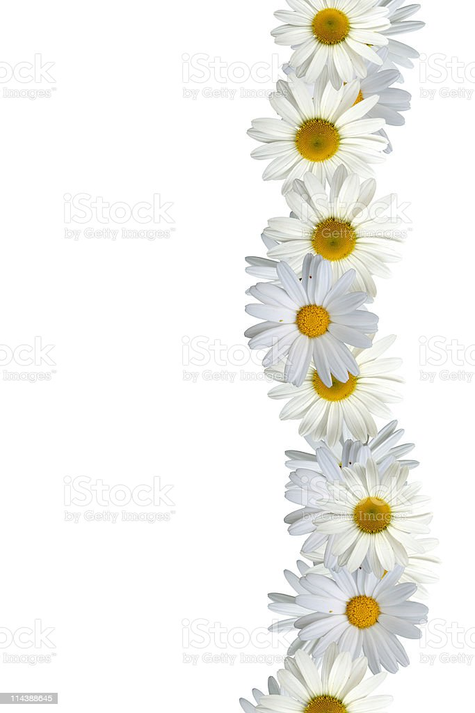 White Daisy Border Stock Photo & More Pictures of Beauty ...