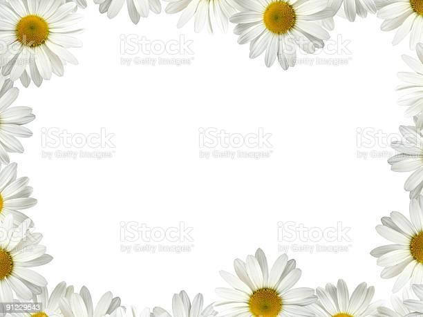 White daisy frame picture id91229543?b=1&k=6&m=91229543&s=612x612&h=elegjqf7d8bvbx5gtiqeddmg263hmq0u2zxqzmgi7sg=