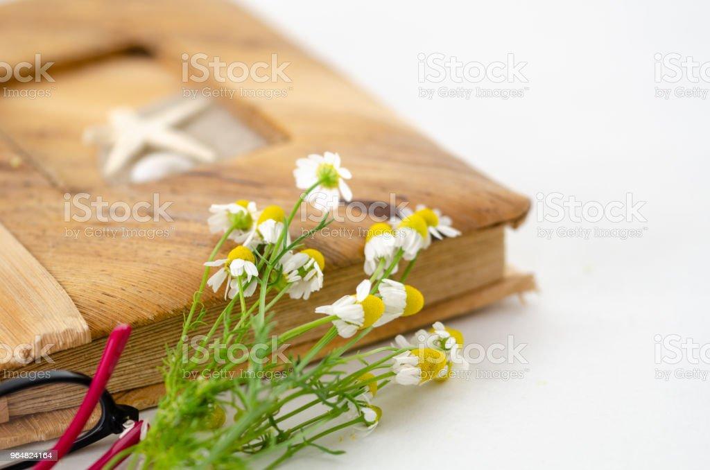White daisy, photo album on white background. royalty-free stock photo
