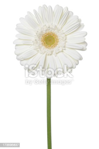 White Gerbera Daisy on a white background.PLEASE CLICK ON THE IMAGE BELOW TO SEE MY BEAUTIFUL FLOWERS LIGHTBOX: