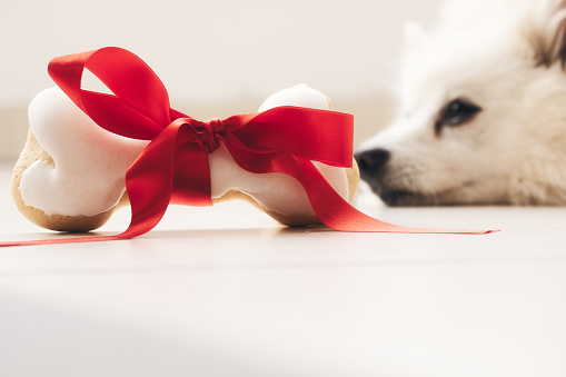 white Dog bone with red bow lying on the flore. gift for the dog. dog snack. present.
