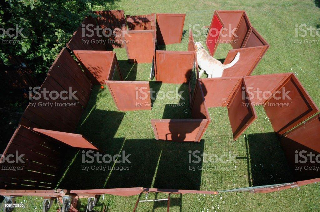 White dog in a maze