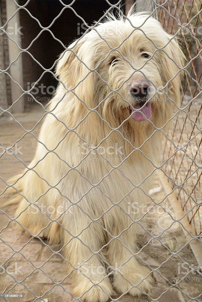 white dog in the cage stock photo