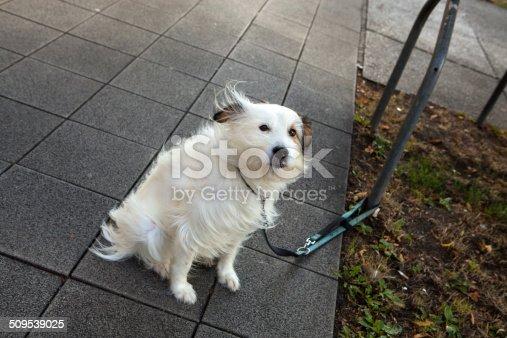 White dog on  sidewalk