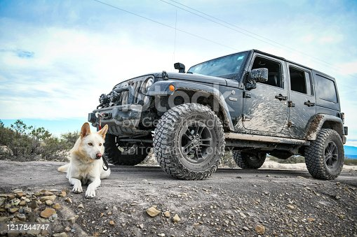Coahuila, Mexico.May 17, 2019. White dog poses next to an all terrain jeep vehicle outdoors. Wide angle shot.
