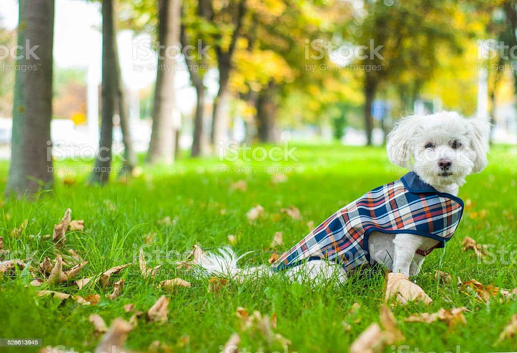White dog sitting stock photo