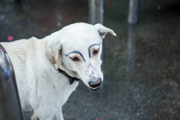 white dog was faking draw eyebrows on street - defame stock pictures, royalty-free photos & images