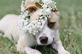 花の冠を身に着けている白い犬