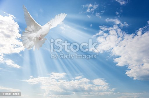 Flying white dove and bright sunbeams on the background of blue sky with fluffy light white clouds
