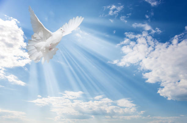 White dove against blue sky with white clouds Flying white dove and bright sunbeams on the background of blue sky with fluffy light white clouds religion stock pictures, royalty-free photos & images