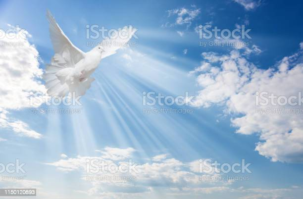 Photo of White dove against blue sky with white clouds