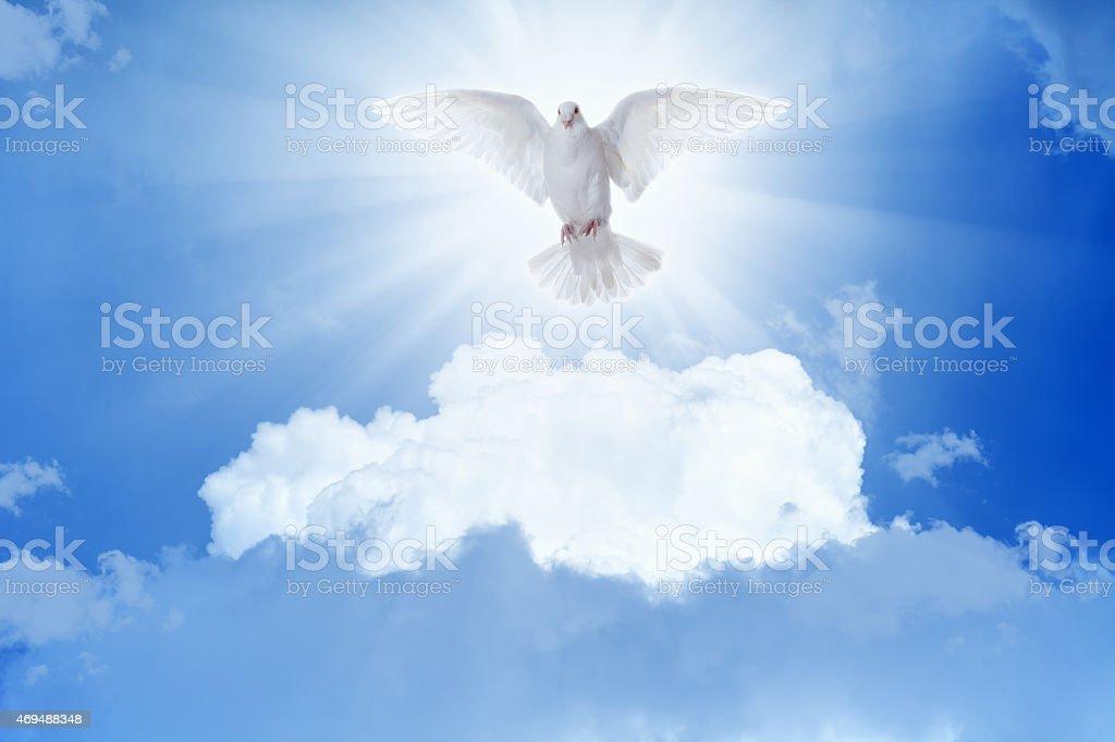 White dove flies in skies stock photo