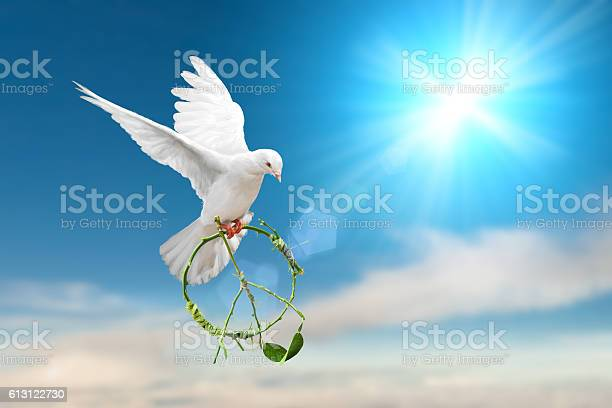 White dove fly on pastel vintage background picture id613122730?b=1&k=6&m=613122730&s=612x612&h=uimbetyjuusaxcmqufq yat86cjbekekyrhekqrpw e=