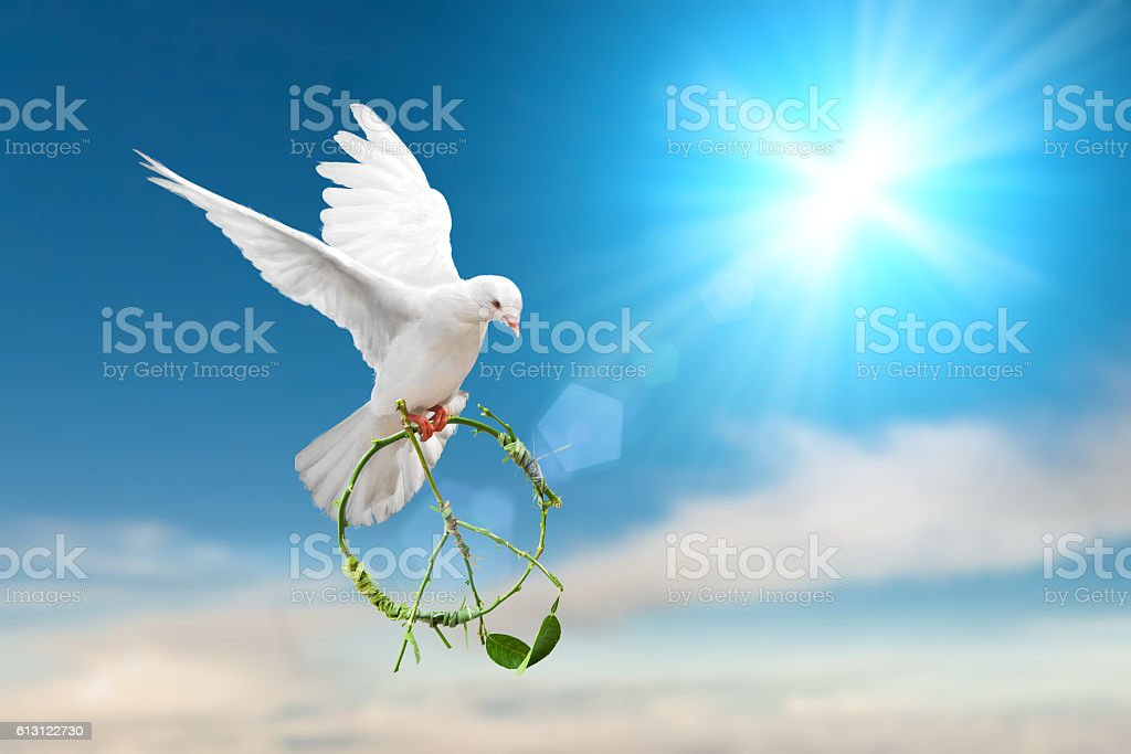 white Dove fly on pastel vintage background stock photo