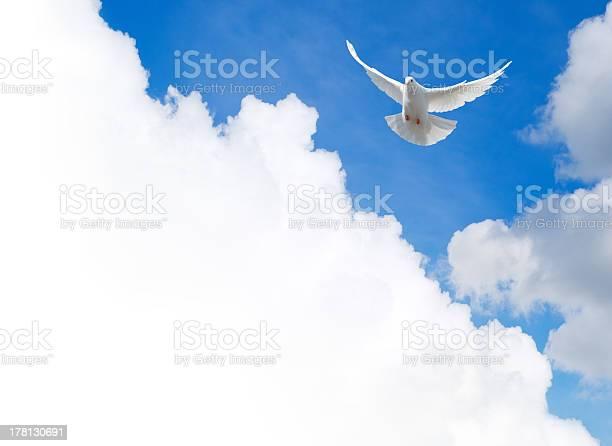 White dove flying in the sky picture id178130691?b=1&k=6&m=178130691&s=612x612&h=a4kc9qmwx86culldifqcrvjnl3ekfa1gw eq yfqtqa=
