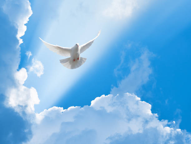 white dove flying in the sun rays among the clouds - religion stock pictures, royalty-free photos & images